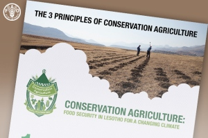 FAO Bulletin: 3 Principles of Conservation Agriculture